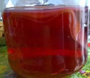 гъба комбуча с чай от каркаде