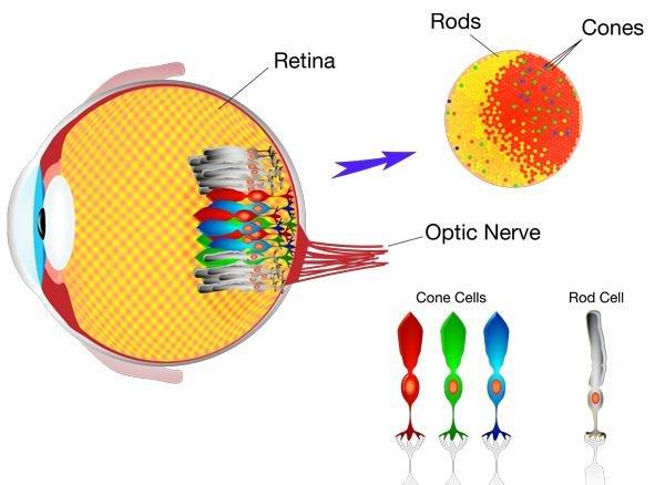 Как да пазим здравето на очите