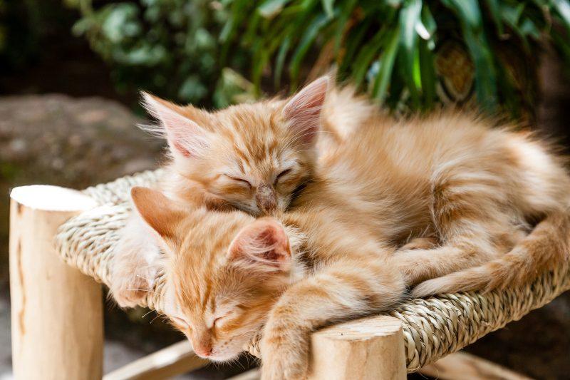 Редовна почивка и сън за здраве и бодрост